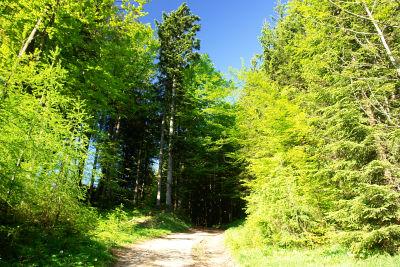 Intensive, saftige Grün-Farben im Wald
