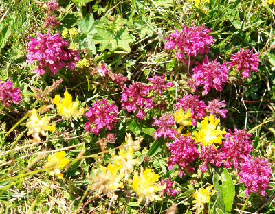 Blumenreiche Natureindrücke