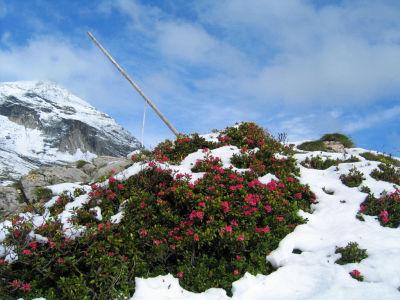 Almrausch und Schnee bei der Steirischen Kalkspitze