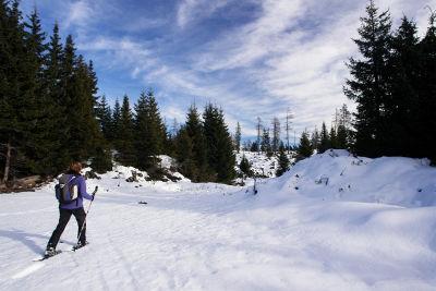 Unterwegs am Plateau: Wald, Lichtungen, Gräben und Hügel