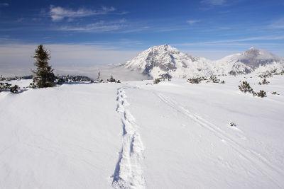 Am Pleschberg-Gipfelplateau