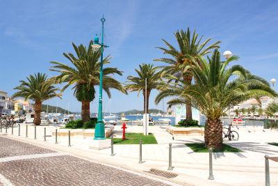 Palmen am Hafen von Mali Losinj