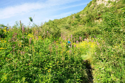 Ingrid (blauer Rucksack in Bildmitte) in der üppigen Pflanzenpracht