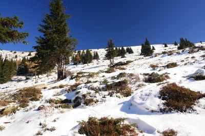 Von der Waldgrenze zum Verbindungskamm zwischen Schleifkogel und Schleifeck