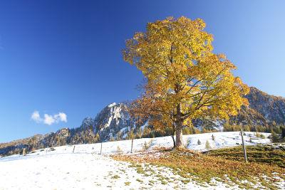Bei der Einbergalm am Übergang zwischen Herbst und Winter