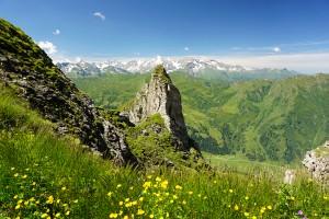 Grüne Blumenwiesen mit Ausblick zum Großglockner
