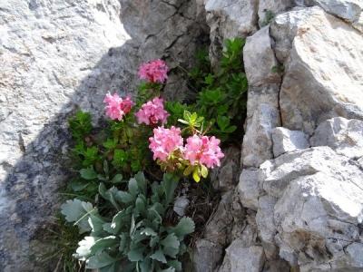 Willkommene Ablenkung in den steilen Felsen