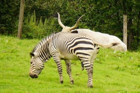 ... und noch einmal Zebrastreifen (Dimensionen, wie sie auch von Eseln bekannt sind ;-) )