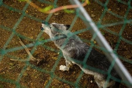 Timberwolf: Ein bisschen heulen für´s Publikum