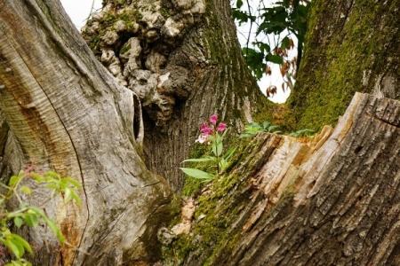 Baum-Blumen