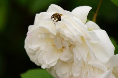 Die Geschichte von den Blumen und den Bienen