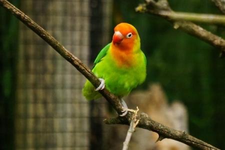 """... so gut geht´s mir in der afrikanischen Vogelvoliere nicht - aber hier ist es """"eh"""" ganz schön."""