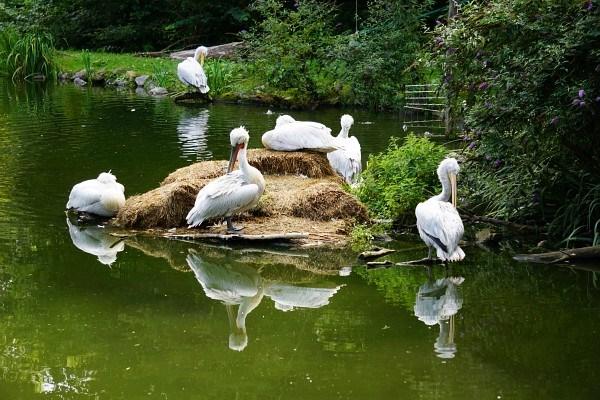 Am Pelikan-Felsen