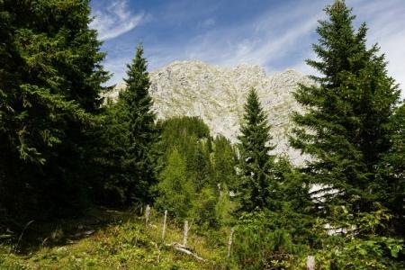 Vom Pyhrgasgatterl durch den Wald