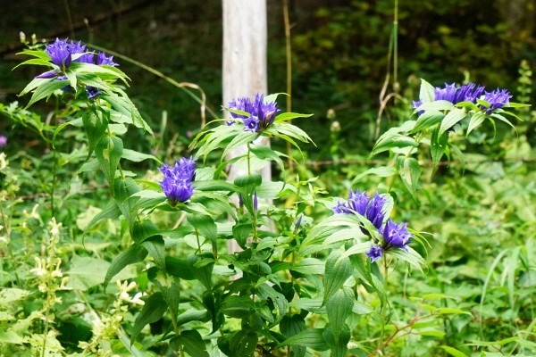 Herrliche Alpenblumen am Weg zurück zur ...