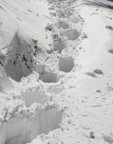 Selbst mit Schneeschuhen versinkt man tief im Schnee