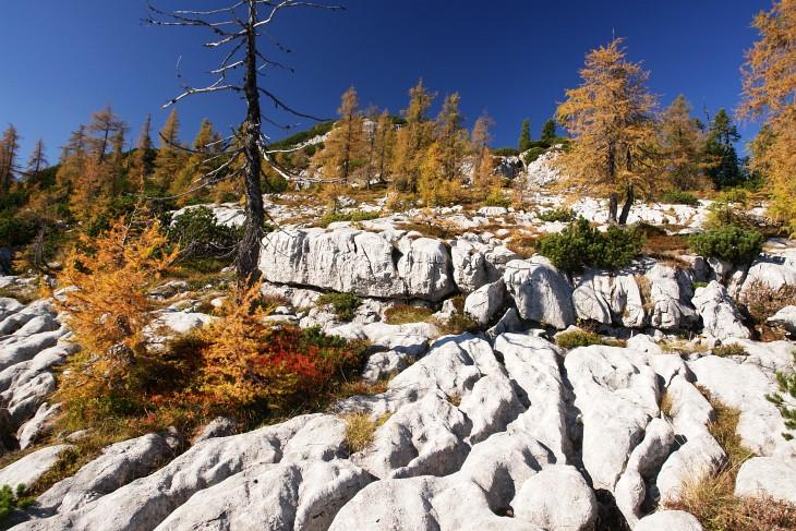 Prächtige Herbstfarben im Karst