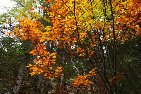 Herbstlich gefärbte Laubbäume