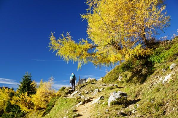 Entspannungswanderung in großartiger Herbst-Landschaft