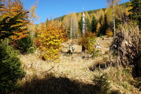 Herbstliche Farbenpracht in der Nähe der Weingaralm