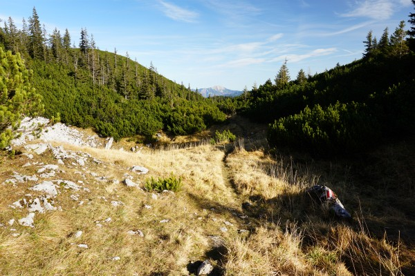 Durch Latschengassen und über Wiesen am langgezogenen Gamsstein-Plateau