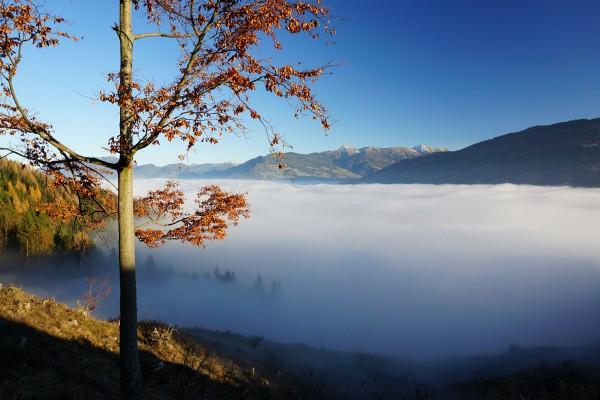 Der Nebel konnte sich heute den ganzen Tag nicht auflösen.
