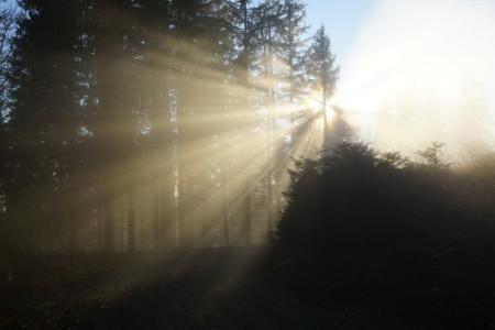 Geheimnisvolle Lichtstimmungen beim Eintauchen in den Nebel