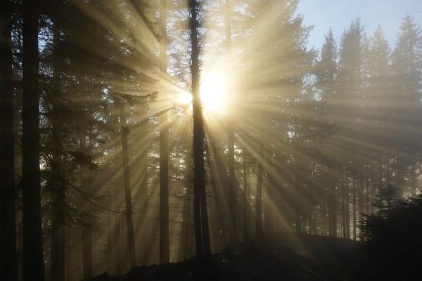 Herrliche Lichtstimmung beim Eintauchen in den Nebel