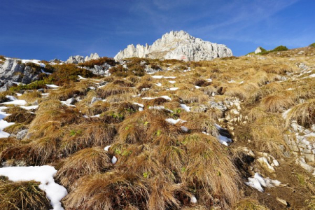 Hohes herbstlich gefärbtes Gras statt Dezember-Schnee