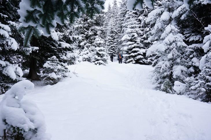 Aufstieg durch den Winterwald. Im unteren Bereich konnten die Schneeschuhe noch am Rucksack bleiben.