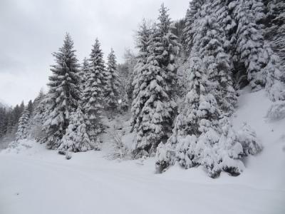 Winterwald am 05.01.2015 - Später setzte Schneefall ein