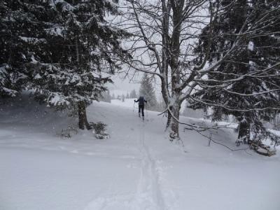 ... nach rechts zwischen ein paar Bäumen hindurch und über eine Wiese einige Höhenmeter abwärts zu ...