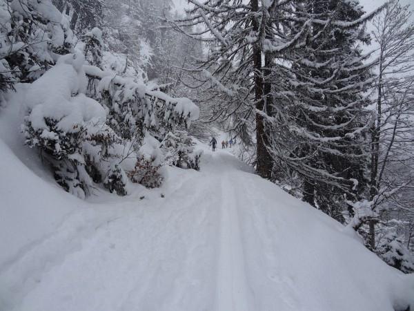 ... einem Forstweg / Hohlweg, der nicht zu steil einige Male unter dem Sessellift hindurchführt.