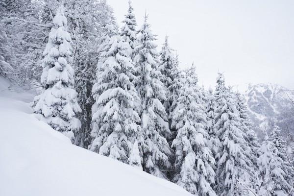 Tiefwinterlicher Wald