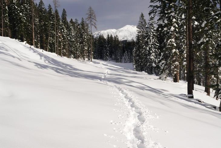 Schneeschuhspur zurück zur Schispur, der wir heute den Großteil des Tages gefolgt sind.