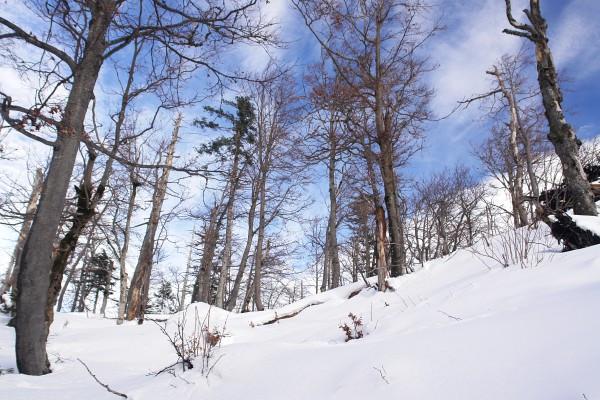 Mühsamer Aufstieg auf den Pötschenstein - das Windwurfgebiet liegt bereits hinter uns.