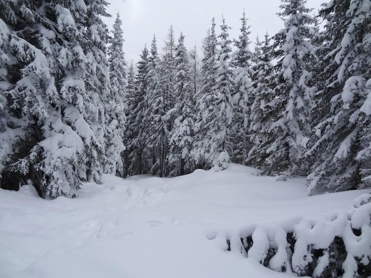 Winterlich präsentiert sich der Wald auf der Hochwurzen