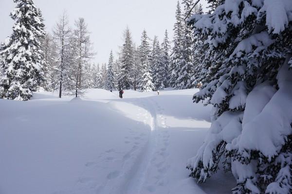 Bei ersten Anstieg gab es noch letzte Schneeflocken ...