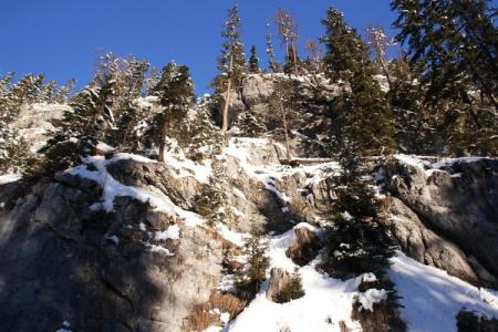 Beim Aufstieg am bis nach der Rahnstube geräumten Forstweg macht sich eine Gams durch warnendes Pfeifen bemerkbar.