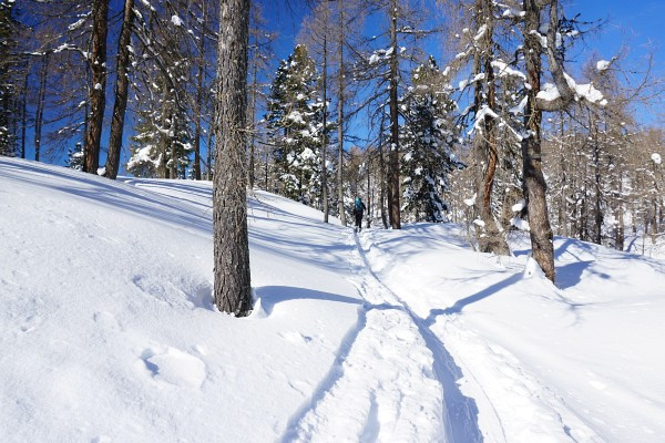 Hügeliges Waldgelände erfordert vorausschauende Spuranlage, um bei der Abfahrt nicht zuviele Gegensteigungen bewältigen zu müssen.