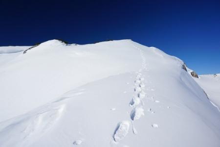 ... zuletzt einer Schneeschuhspur folgend ...