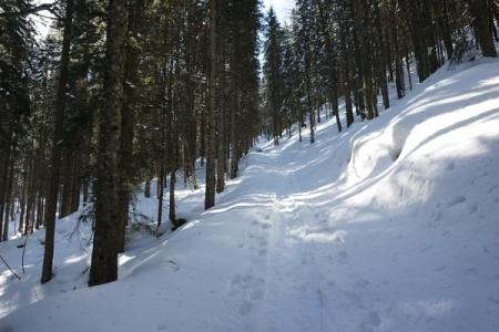 Vom Ödensee geht es im unteren Abschnitt über Hohlwege durch den Wald. Mehrfach wird eine Forststraße gekreuzt.