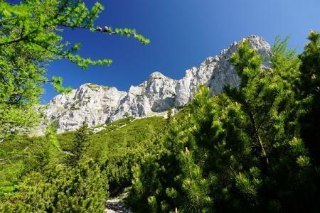 An der Baumgrenze. Nach einem Latschengürtel warten die faszinierenden Felswände der Heukuppe.