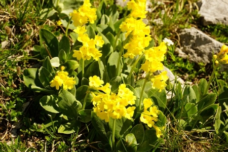 Der Weg wird flankiert von in (fast) allen Farben leuchtenden Alpenblumen