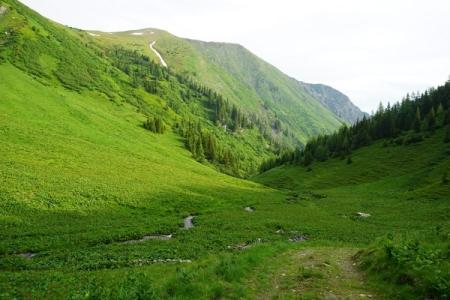 Grün ist die dominierende Farbe der heutigen Wanderung über die einzelnen Alm-Etagen Unterrieden, Mitterrieden, Oberrieden