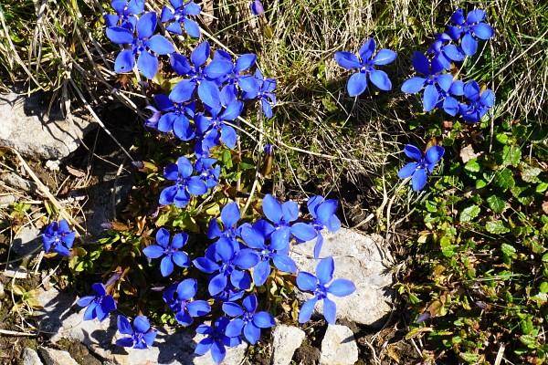 Blaue Exemplare