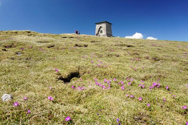 Das Gipfel-Bauwerk auf der Heukuppe - flankiert von zahlreichen Alpenblumen.
