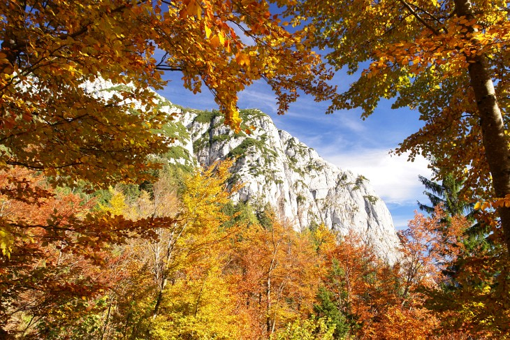 Durch den Herbstwald zum Backenstein
