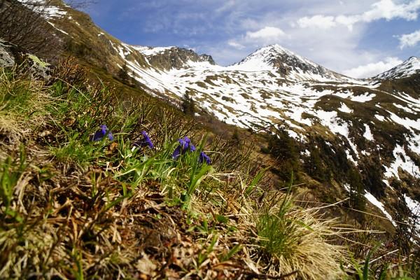 Zurück am alpenblumengesäumten Wanderweg mit Blick zum Hochstubofen