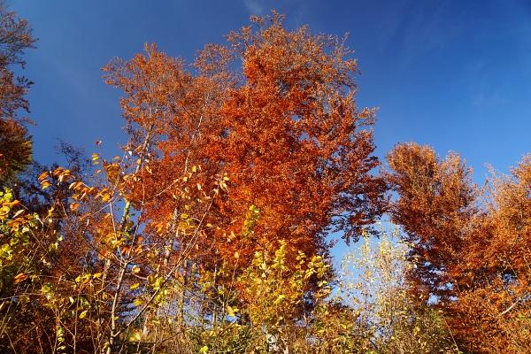 Herbststimmung in Weißenbach bei Haus